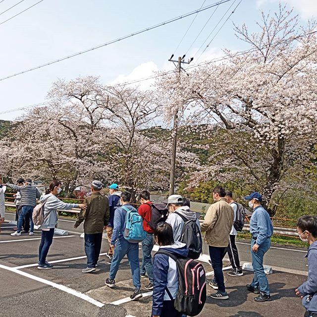 法多山尊永寺にお花見に行きました。桜は5〜7分咲きで綺麗でした。みんなが楽しみにしている厄除け団子は、コロナウイルス感染予防のため職員が午前中のうちに買いに行きました。この時期限定の桜団子も運良く買えて、100箱近く買ってきました。 - From Instagram